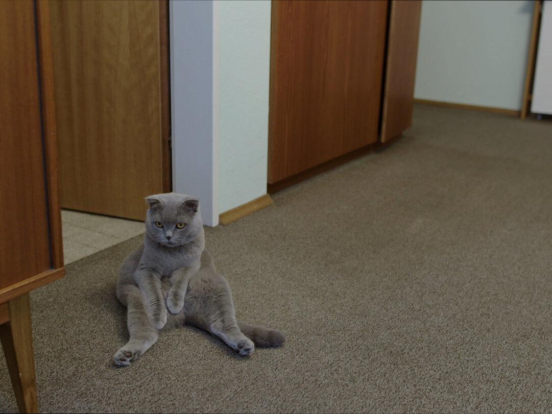 Still du film Nachts sind alle Katzen grau